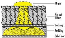purt-diagram